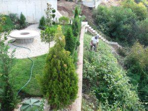 Подрязване на дръвчета