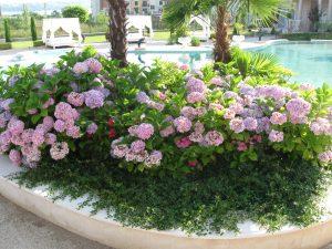 Сеитба на рози